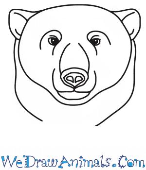How to Draw a Polar Bear Head in 7 Easy Steps