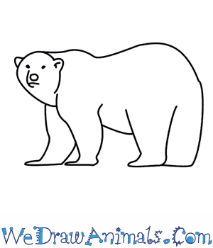How to Draw a Polar Bear in 8 Easy Steps