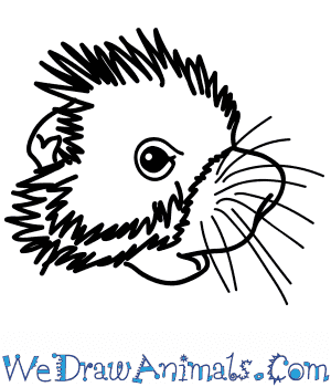 How to Draw a Porcupine Face in 6 Easy Steps