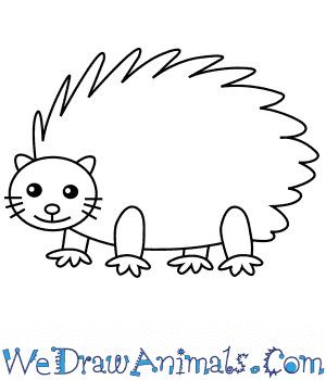 How to Draw a Porcupine For Kids in 5 Easy Steps