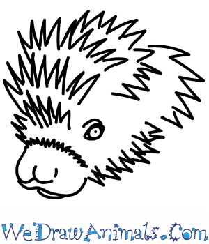 How to Draw a Porcupine Head in 11 Easy Steps