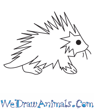 How to Draw a Porcupine in 4 Easy Steps