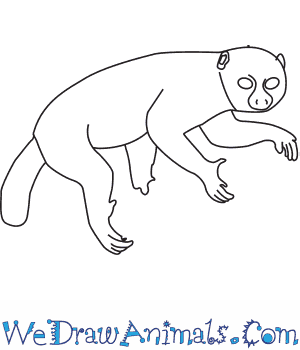 How to Draw a Potto in 8 Easy Steps