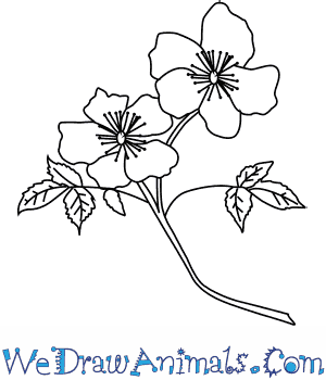 How to Draw a Primrose Flower in 4 Easy Steps