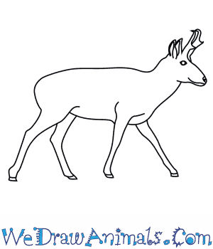 How to Draw a Pronghorn in 7 Easy Steps