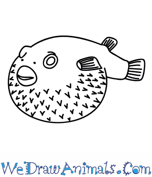 How to Draw a Puffer Fish in 5 Easy Steps