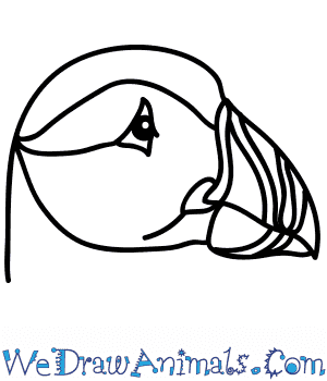 How to Draw a Puffin Face in 5 Easy Steps