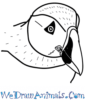 How to Draw a Puffin Head in 11 Easy Steps