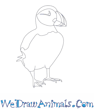 How to Draw a Puffin in 12 Easy Steps