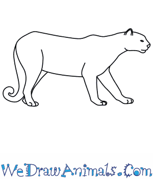 How To Draw A Puma