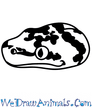 How to Draw a Python Face in 5 Easy Steps