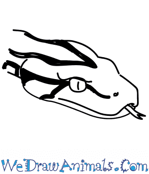 How to Draw a Python Head in 8 Easy Steps