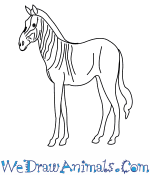 How to Draw a Quagga in 9 Easy Steps