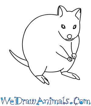 How to Draw a Quokka in 10 Easy Steps