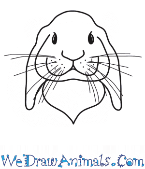 How to Draw a Rabbit Head in 7 Easy Steps