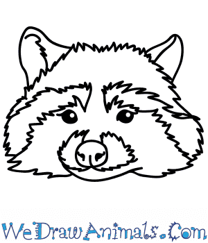 How to Draw a Raccoon Face in 6 Easy Steps