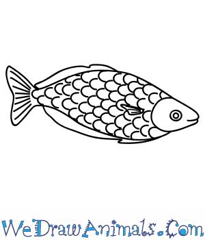 How to Draw a Rainbow Fish in 7 Easy Steps