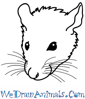 How to Draw a Rat Face in 5 Easy Steps