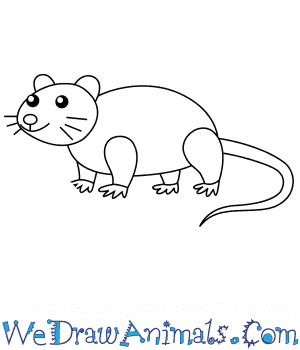 How to Draw a Rat For Kids in 6 Easy Steps