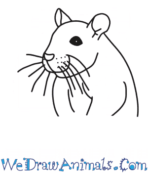 How to Draw a Rat Head in 7 Easy Steps