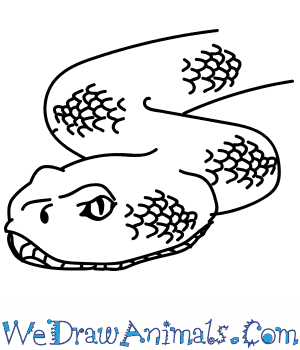How to Draw a Rattlesnake Head in 9 Easy Steps
