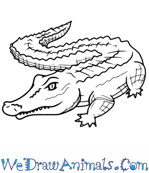 How to Draw a Realistic Alligator in 8 Easy Steps