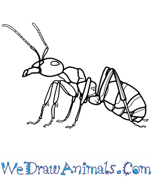 How to Draw a Realistic Ant in 8 Easy Steps