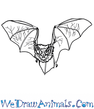 How to Draw a Realistic Bat in 8 Easy Steps