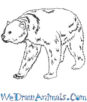 How to Draw a Realistic Bear in 8 Easy Steps