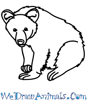 How to Draw a Realistic Black Bear in 6 Easy Steps