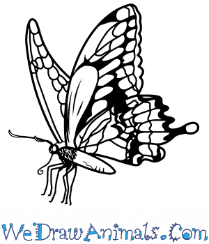 How to Draw a Realistic Butterfly in 8 Easy Steps