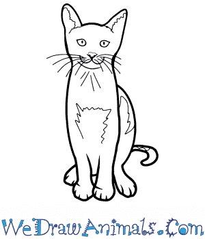 How to Draw a Realistic Cat in 8 Easy Steps