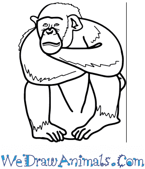How to Draw a Realistic Chimpanzee in 8 Easy Steps