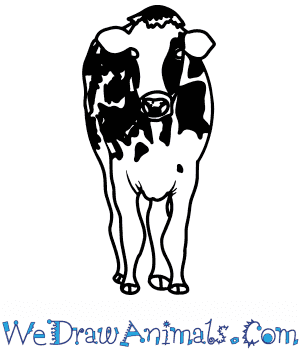 How to Draw a Realistic Cow in 8 Easy Steps