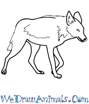 How to Draw a Realistic Coyote in 8 Easy Steps