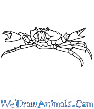 How to Draw a Realistic Crab in 8 Easy Steps