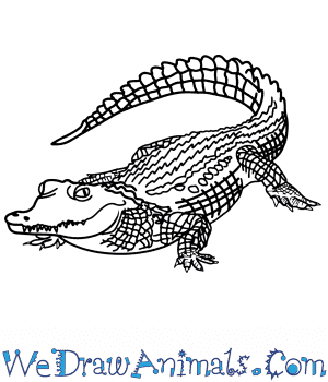 How to Draw a Realistic Crocodile in 8 Easy Steps