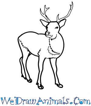 How to Draw a Realistic Deer in 8 Easy Steps