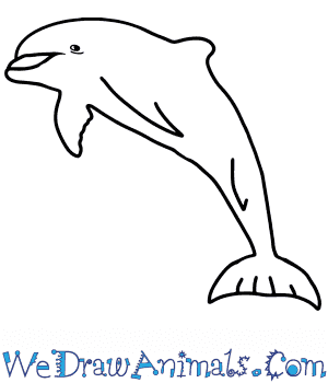 How to Draw a Realistic Dolphin in 8 Easy Steps
