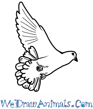 How to Draw a Realistic Dove in 8 Easy Steps