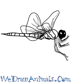 How to Draw a Realistic Dragonfly in 8 Easy Steps