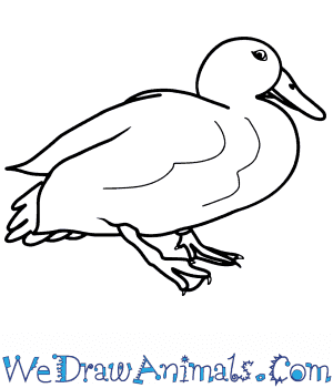 How to Draw a Realistic Duck in 8 Easy Steps
