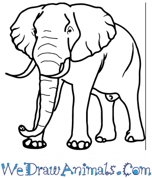 How to Draw a Realistic Elephant in 8 Easy Steps