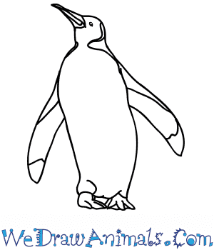How to Draw a Realistic Emperor Penguin in 7 Easy Steps