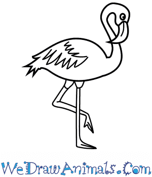 How to Draw a Realistic Flamingo in 5 Easy Steps