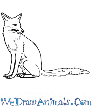 How to Draw a Realistic Fox in 8 Easy Steps