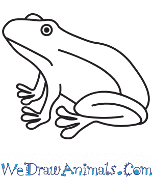How to Draw a Realistic Frog in 9 Easy Steps