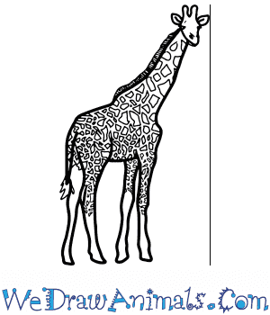 How to Draw a Realistic Giraffe in 8 Easy Steps