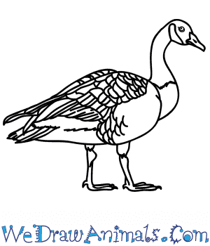 How to Draw a Realistic Goose in 7 Easy Steps