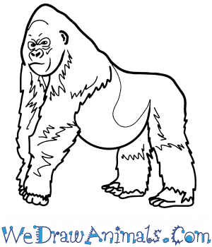 How to Draw a Realistic Gorilla in 8 Easy Steps